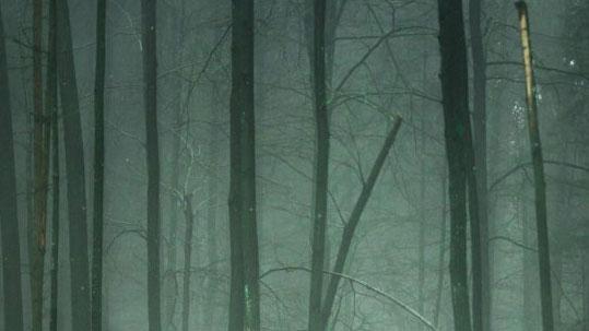 Deep green fog