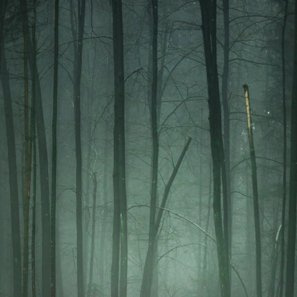 Deep_Green_fog-775190-edited