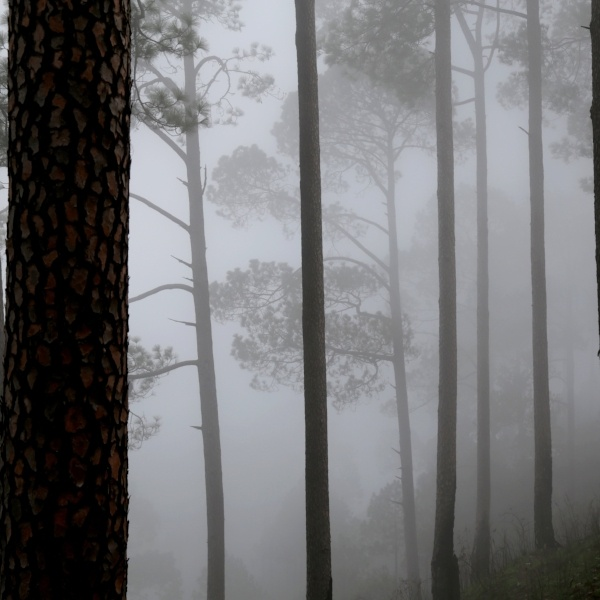 Gloomy_fog-313699-edited
