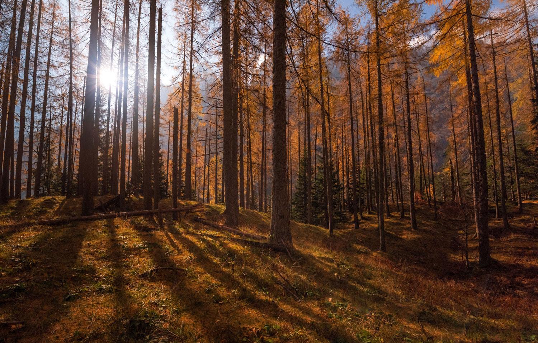 cpa-FALL-TREES